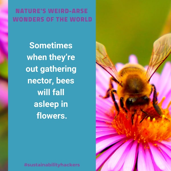 Weird Nature Facts - Sustainability Hackers - Bees Sleeping