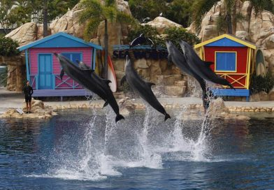 Animal Welfare NGO Calls For Captive Dolphin Breeding Ban In Queensland