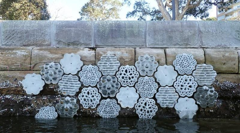 Living Seawalls To Bring New Life To Sydney's Rushcutters Bay