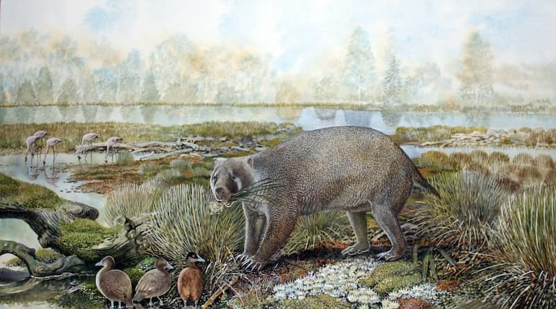 Study Identifies Extinct Family Of Giant Wombat Relatives Discovered In Australian Desert
